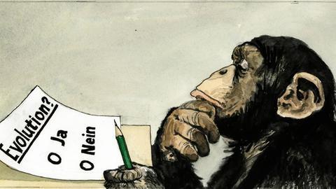 Eine schwierige Entscheidung! Affe denkt darüber nach: Evolution? Ja oder Nein