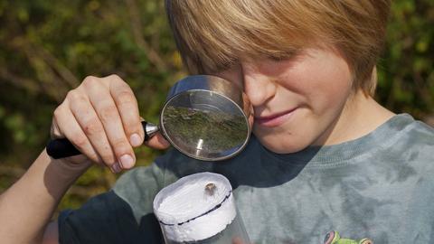 Ein Junge mit einer Lupe betrachtet eine Spinne in einem Becherglas.