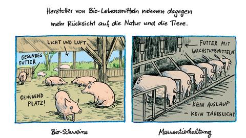 """Seite aus dem Kinderbuch """"Alles lecker"""" mit Zeichnung eines Bioschweinestalls und eines Stalls mit Massentierhaltung"""