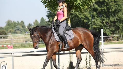 Junge Frau reitet ein braunes Pferd auf dem Reitplatz
