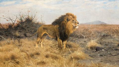 Wilhelm Kuhnert, Löwe