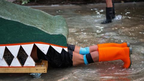 """Ein Mitglied von """"Contact Gonzo"""" verschwindet in einem Krokodilmaul."""