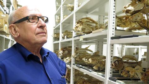 Gerad Mangel vom Senckenberg-Museum vor Fischskeletten