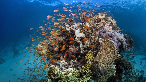 Great Barrier Reef an der Küste von Queensland (Australien)