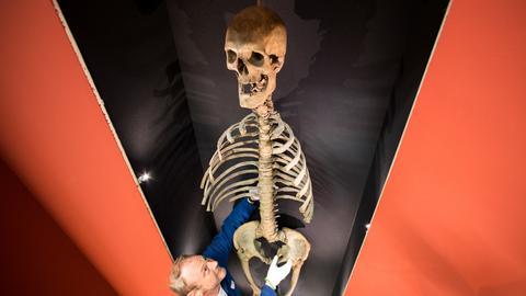 """Skelett """"Langer Anton"""""""