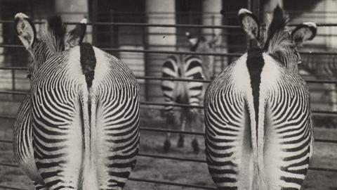 """Fotografien aus der Ausstellung """"Neu Sehen"""" im Frankfurter Städel"""