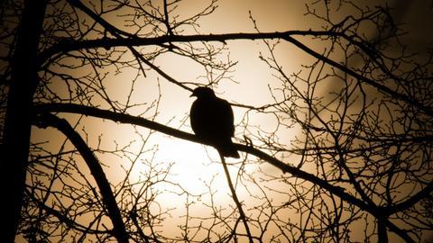 Eine Taube sitzt auf einem blattlosen Baum - im Gegenlicht