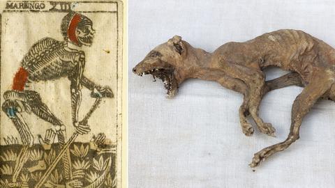 "Bildkombo: linkesTarotkarte ""Tod"", rechts mumifizierte Katze (Grabbeigabe)"
