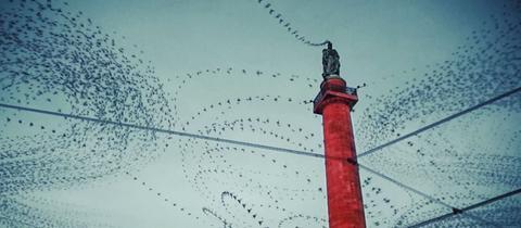 Luisenplatz mit tausenden Tauben aus Video
