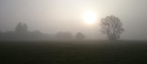 Morgennebel in den Schwalmwiesen und die Sonne kämpft sich durch den Nebel. Dieses Stimmungsbild vom heutigen Spaziergang Richtung Ziegenhain hat uns hessenschau.de-Nutzerin Kornelia Montanus aus Steinatal geschickt. Haben Sie auch ein außergewöhnliches Bild aus Hessen? Dann schicken Sie uns Ihr Foto – wir freuen uns über Ihre Momentaufnahme.