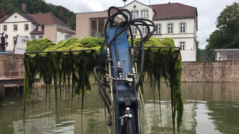 Mit schwerem Gerät werden die Algen aus dem Becken geschöpft.