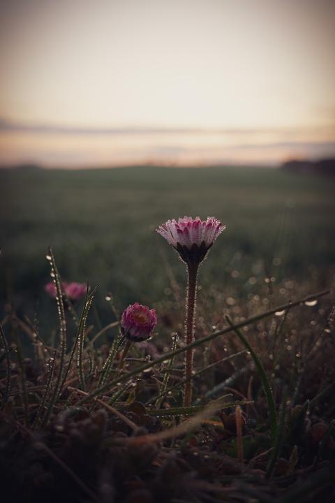 Eine Blume im Morgennebel