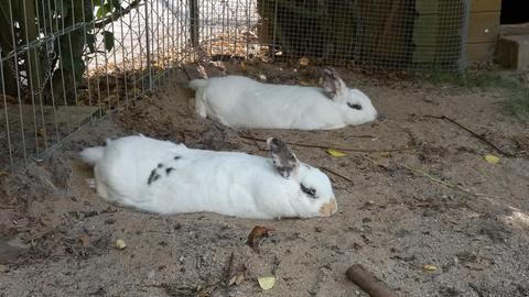 Die Hitze macht Hildes Kaninchen zu schaffen