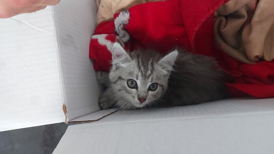 Katze Radkasten