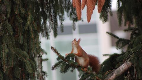 Momentaufnahme Eichhörnchen