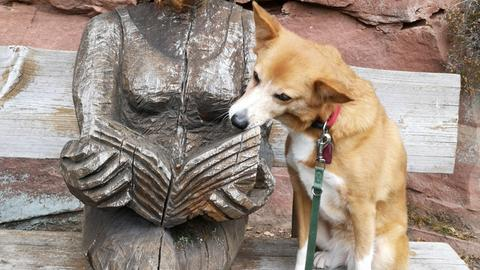 Momentaufnahme Hund
