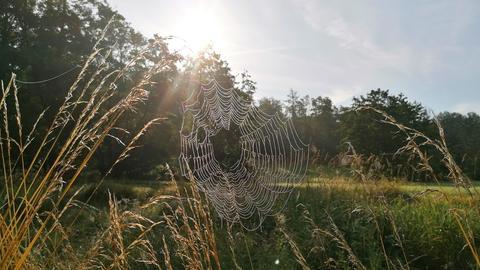 Frühtau in Spinnennetz