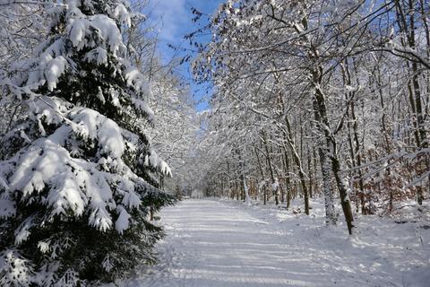 Winterwald im Taunus bei Heidenrod