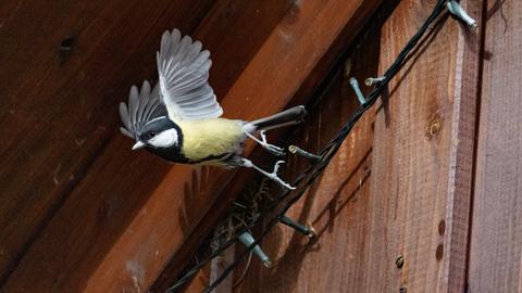 Momentaufnahme Vogel