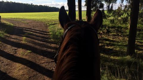 Pferd Morgenticker