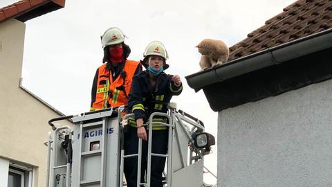 Rettung Katze Friedrichsdorf-Seulberg