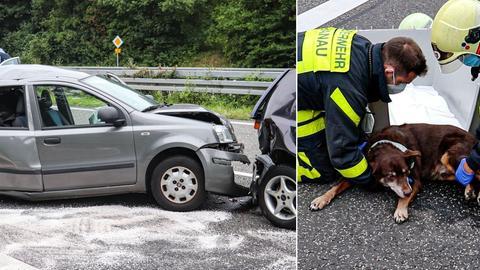 Unfall Hund Hanau B45