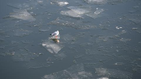 winter-eis-bilder Möwe auf Eisscholle