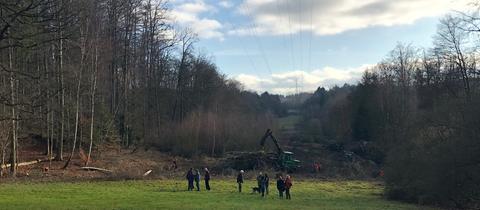 A49-Gegner sind schockiert: Gefällte Bäume liegen aufeinandergestapelt am Waldrand.