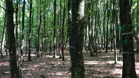 Um diese Bäume geht's in Leipzig - unter anderem: Aktivisten haben im Dannenröder Forst mit Kreide an den Bäumen markiert, wo die A49-Trasse entlanglaufen soll.