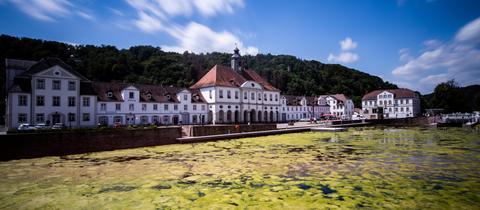 Algen und Schilf sind auf der Wasseroberfläche im Hafenbecken von Bad Karlshafen zu sehen.