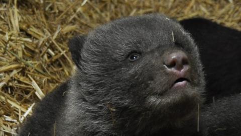Bärenbaby schaut nach oben