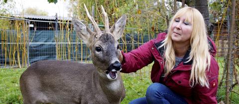 """Bambi"" in Groß-Zimmern"