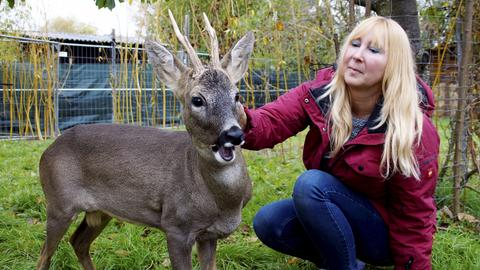 """Bambi"" in Groß-Zimmern"