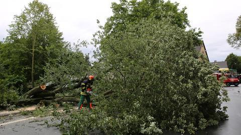 Ein umgestürzter Baum.