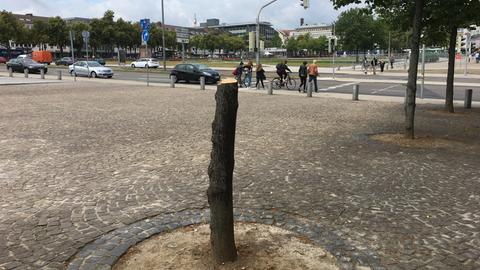 Abgesägter Baum in Kassel