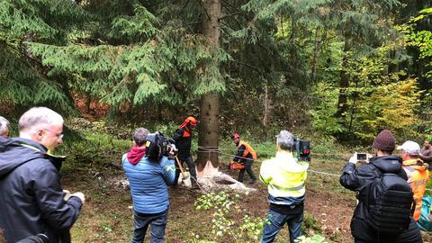 Forstarbeiter fällen die 30-Meter-Fichte, die zeitgleich von einem Kran in der Luft gehalten wird.
