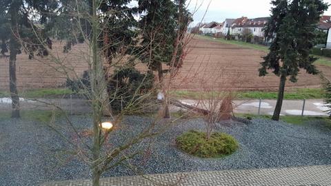 Umgestürzter Baum in Weiterstadt