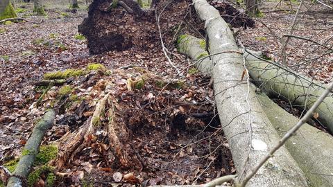 Entwurzelter Baum bei Driedorf.