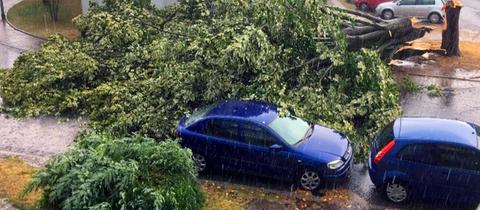 Umgestürzter Baum in Frankfurt