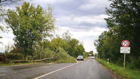 Umgestürzter Baum bei Rodgau-Jügesheim im Kreis Offenbach.