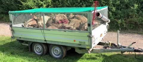 Getötete Schafe