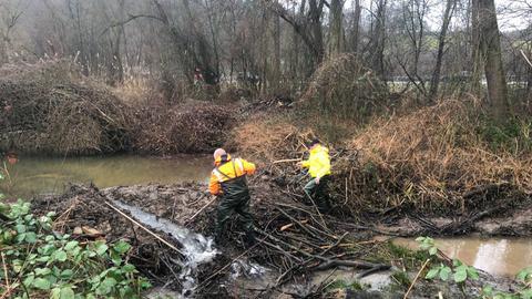 Einer der beiden Biberdämme in Bad König wird abgetragen