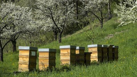 Bienenstöcke auf einer Wiese