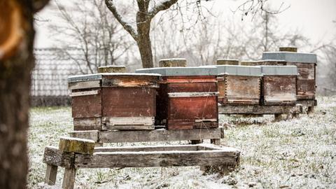 Bienenstöcke auf einer Wiese im Winter