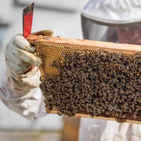 Imker Frankfurt Bienen
