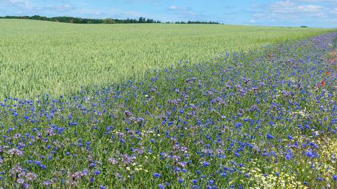 Fläche mit verschiedenen Blumen am Rand eines Getreidefeldes