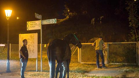 Ein Pferd wird in Sicherheit gebracht