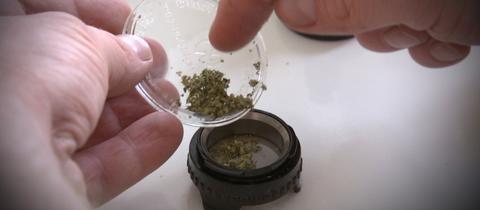 Cannabis wird in einem Schälchen portioniert