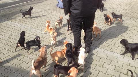 Tierquälerei 79 Hunde in Haus eingesperrt