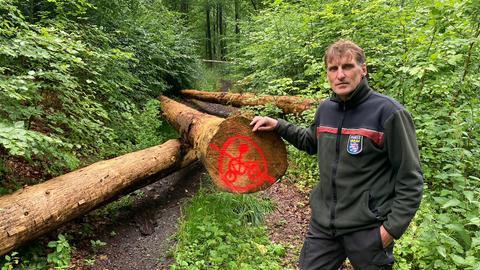 Forstamtsmitarbeiter steht vor Baumstämmen, die illegale Mountainbikestrecke sperren